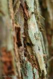California Redwood bark