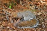 squirrel hunts