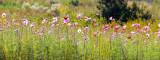 Flowers along US Hwy 1 near Waycross, Georgia