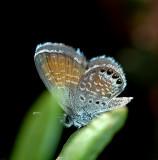 Maui Butterflies and Moths