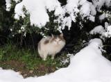 Meteora. Snow cat