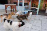 Santorini. Dog storm