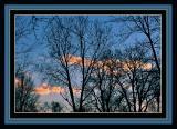 trees in twilight