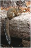 baby squirrel 1