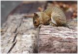 baby squirrel 2