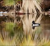 duckshop