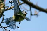 Birds in Sweden