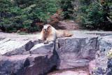 Marmot - A closer look