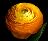 26 February - Another flower...