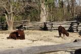 12.  More of the Randolph farmyards.