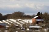 4.  Sleeping vineyards.