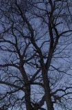 Bare branches against a cold morning sky