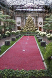 A pool of cranberries in the main conservatory, towards the music room.