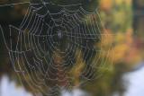 25.  A web at Lefferts Pond.