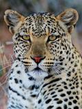 Kgalagadi Wildlife