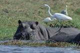 Botswana - Chobe national park 2012