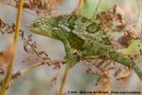 Reptiles  (Reptielen)