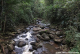 A forest stream in Amani