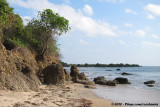 Tanzanian Coast with some mangroves in the background