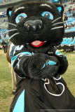 Sir-Purr - Carolina Panthers mascot