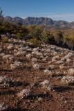 Flinders Ranges Vegetation