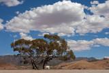 Australian Skies