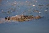 Croc, Kakadu NP