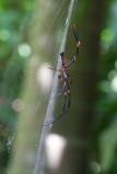 Large spider