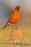 Louisiana Wildlife 2009