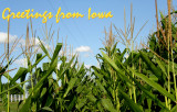 Stage 10:  What a corny postcard our farm's corn makes!