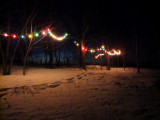 Out back down the hill our lighted tree grove. (2/2/11)