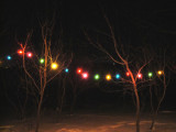 Simple strands of lights on our backyard tree grove. (2/2/11)