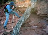 Photographing Tree Bark