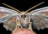 Moth '09 - 2