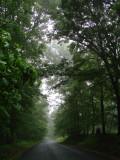 Foggy Morning on Ebenezer