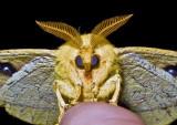 Moth '09 - 17