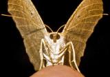Moth '09 - 33b