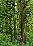 Moss-on-Trees---3