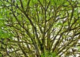 Moss-on-Tree---5