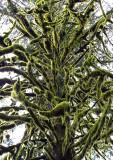 Moss-on-Tree---4