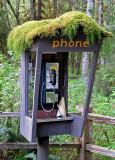Rainforest-Phone