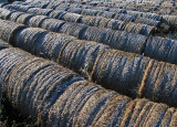 Frosted Hayrolls