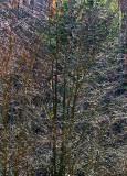 W.V. Trees -1