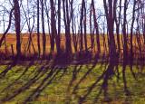 W.V. Tree Shadows