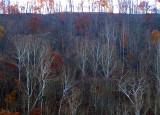 W.V. Trees - 4