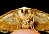 Moth-2010-3