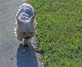 Katie on her sidewalk
