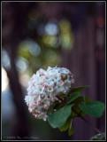 Flower outside Marigold Garden