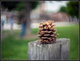 Pine cone on post -- bokeh