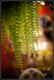Hanging Fern at Lick's